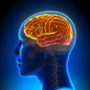 Débats, conférences : le cerveau à l'honneur à Lyon