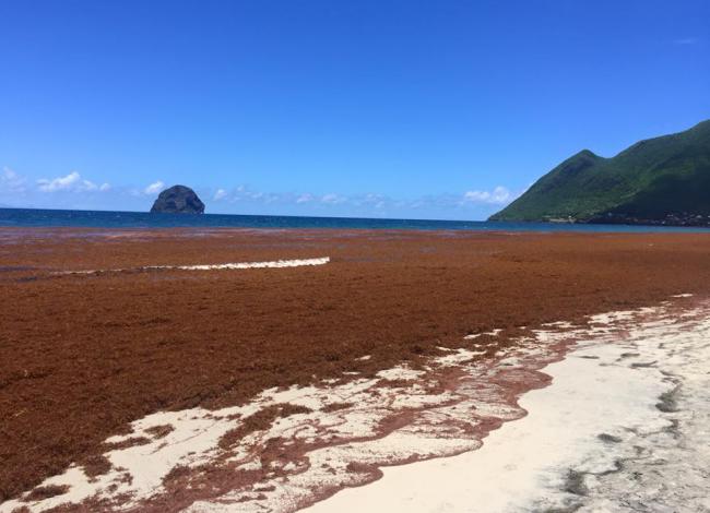 ALGUES Martinique