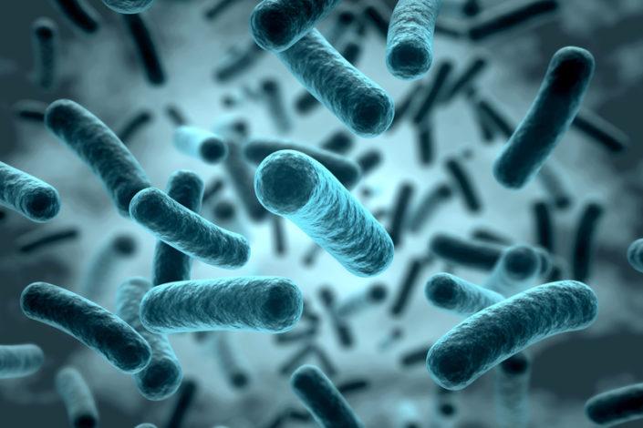 Bactérie Klebsiella Pneumoniae